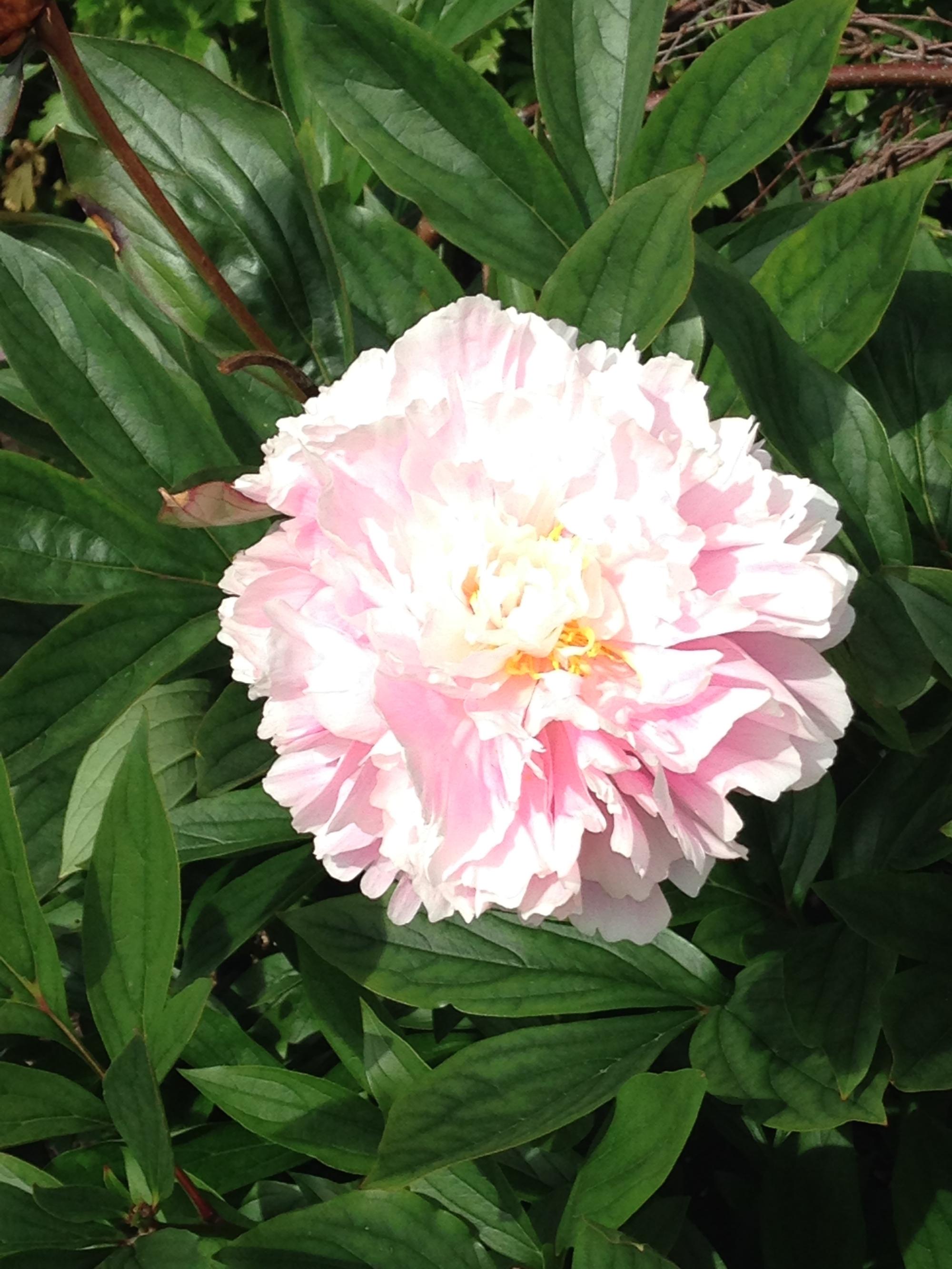 pink pastel blossom