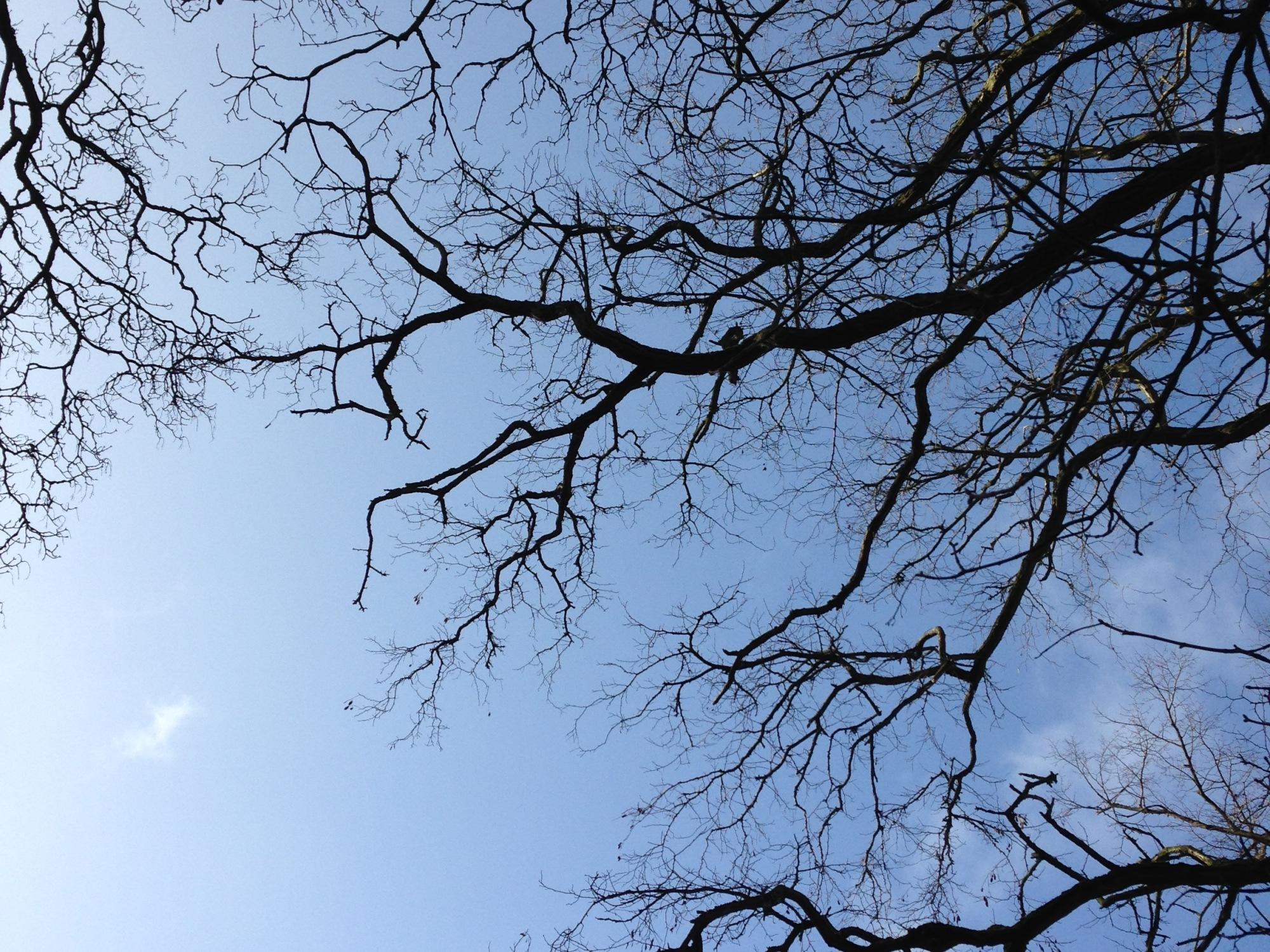 blue sky reiki