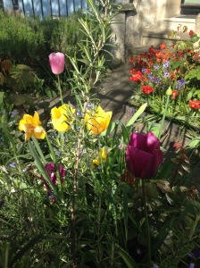 multi coloured flowers